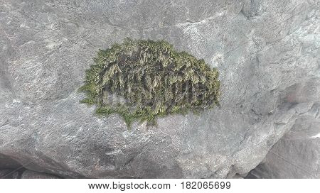 Greenery at stone found in swat meadow, Seen capture