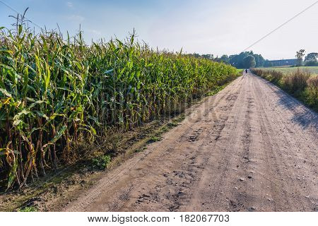 Country road and corn field in Pomorskie Region Poland