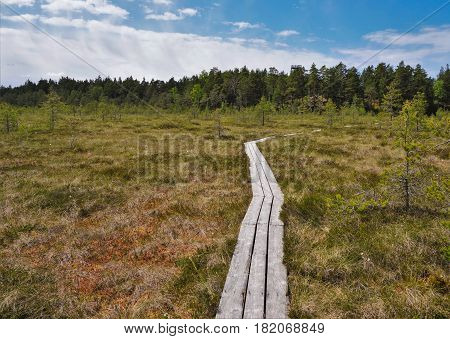 National park wooden path in marsh area