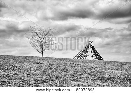 Lonely fir tree on horizon and rural country. Black and white photography