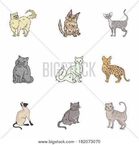 Collection of cats in one picture. Different cats in one picture. Cat breeds icon in set collection on cartoon style vector symbol stock web illustration.