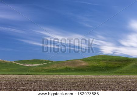 Rolling green hills under a blue sky in the palouse region of eastern Washington.