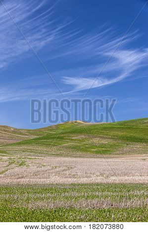Green hills under a blue sky in the palouse region of eastern Washington.
