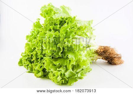 Romaine lettuce (Lactuca sativa) isolated in white background