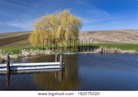 Pond and yellow tree in Eastern Washington.