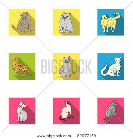 Collection of cats in one picture. Different cats in one picture. Cat breeds icon in set collection on flat style vector symbol stock web illustration.