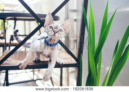 Cat is walking outdoor. Playfull kitten. Adventure cat. Cat is enjoying being in fresh air. The pleasure of fresh air and sunshine. Safety Tips. Train your cat walking