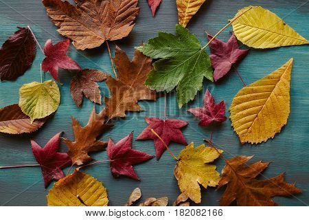 Autumn leaves background. Texture of fallen leaves. Colorful leaves on a blue wooden background. Abstract background and texture for designers.