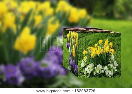 3D Cube flower, Petunias, Yellow daffodil, pansies, snapdragon and marigold, beautiful flower green grass background