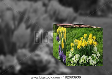 3D Cube flower, Petunias, Yellow daffodil, pansies, snapdragon and marigold, beautiful flower grass background black white