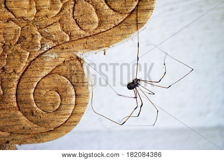 Spider climbing up the side of a chair