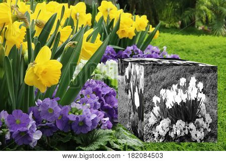 3D Cube flower,Petunias, Yellow daffodil,pansies, snapdragon and marigold, beautiful flower green grass background black white