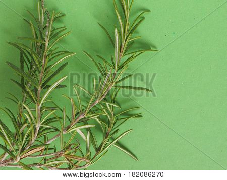 Rosemary (rosmarinus) Plant Over Green With Copy Space