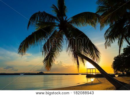 Silhouette of a coconut palm tree at sunset at dreamy tropical beach in Maldives