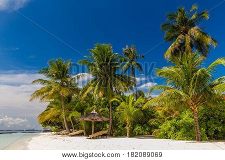 Coconut palm trees at a dreamy beach