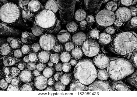 Maritime transportation industry. View to wood log pile.