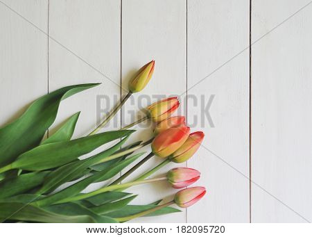 Red tulips om a white wooden background