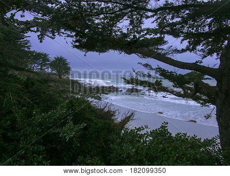 View of Carmel Beach through Cypress tree-lined coastline