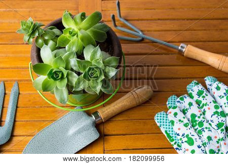 Gardening Tools And Houseleek Plant On A Table