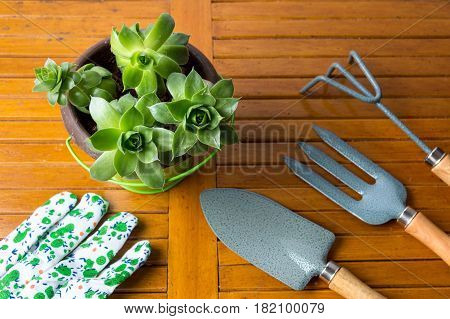 Gardening Tools And Houseleek Plant