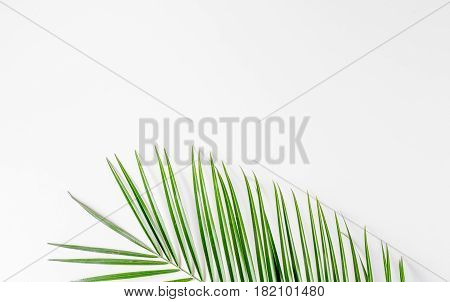 Trendy design with green herbs pattern of anthurium and palm on white desk background top view mock up