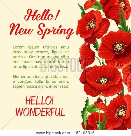 Hello Spring greeting card or poster template with blooming bunch of red poppy blossoms and spring time floral petals. Vector flourish design of springtime nature flowers in bloom