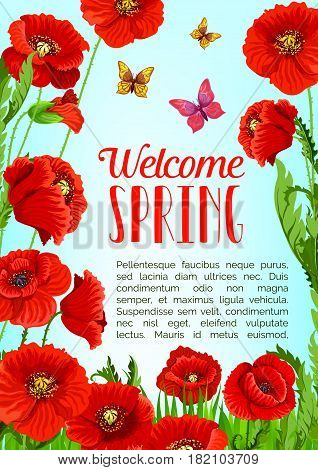 Welcome Spring greeting card or poster with blooming field of red poppy flowers and butterflies in green grass. Vector template design of springtime flourish nature in bloom and bunches of red flowers