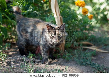 Rustic Cat On A Background Of Bushes With Flowers