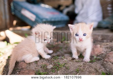 Two Small Funny Kitten Sitting On The Ground