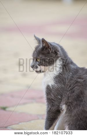 Portrait of a domestic cat with a blurred background