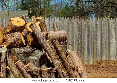 Lumberjack worker with chainsaw cutting log of wood tree trimming