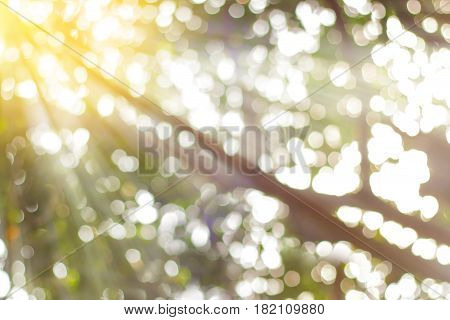 green bokeh with sun ray in forest. natural green blurred background.