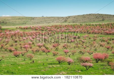 Orchard farm. Rows of trees. Nature composition.