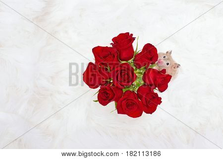 Hamster and red roses represent the idea to Stop and Smell the Roses.