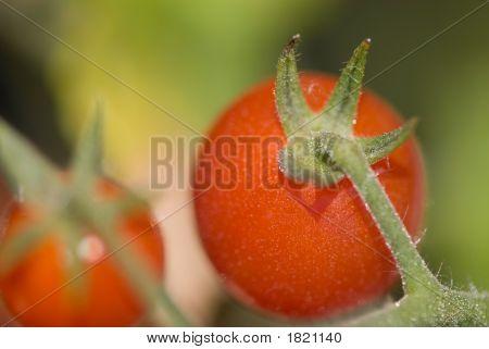 Vine Ripened Cherry Tomatoes