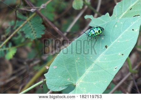 green lady bug in the tropical plantation