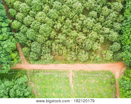 Durian Trees Orchard And Rubber Trees Plantation