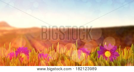 Picture of a flower against cultivated land against clear sky