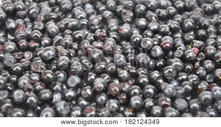 Blueberry called bilberry huckleberry or European blueberry with black color. Forest Blueberry textured background. Freshly picked wild blueberries. Wild Blueberry Photo. Blueberries background.
