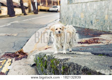 Portrait of a Sad Homeless Dog. Homeless and hungry dog abandoned on the streets