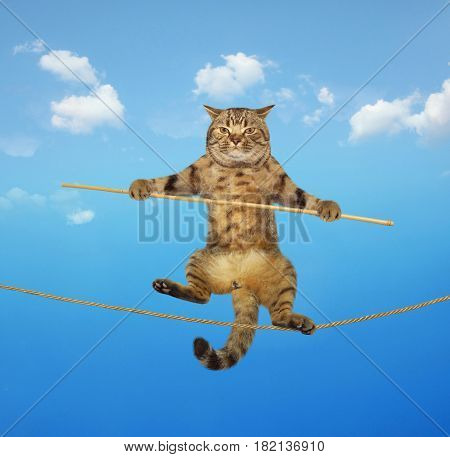 The brave cat is walking on the tightrope.
