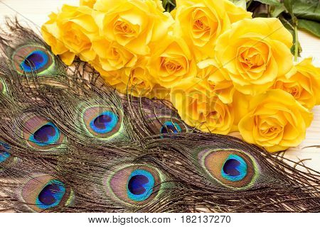 Peacock tail eyes feathers next to yellow rose flowers