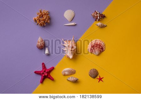 Composition Of Seashells On Colorful