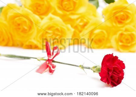 Red carnation flower with bow in front of yellow roses