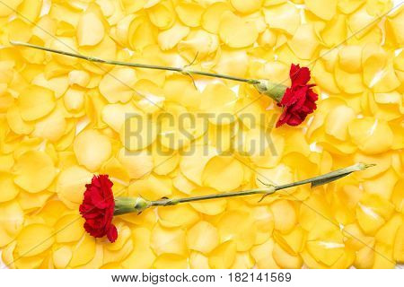 Two red carnation flowers on pile of yellow rose petals