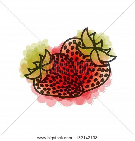 watercolor drawing of pair strawberries fruits vector illustration