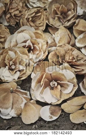 Decaying white camellia flowers on ground in vertical position