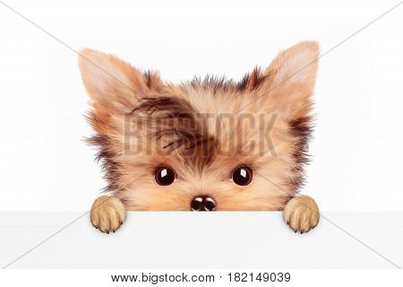 Funny adorable puppy sitting frontal and holding empty banner, isolated on white. Realistic illustration of yorkshire terrier with clipping path