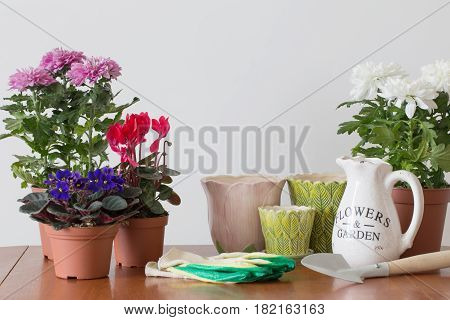 houseplants in a pot on the table
