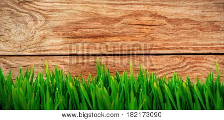 Grass growing outdoors against brown wood panelling